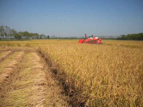 AEBL Combine harvester in operation in rice field.