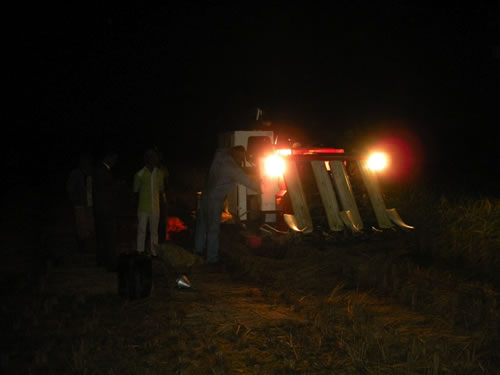 The Combine harvester can also harvest at night, using its own lights.